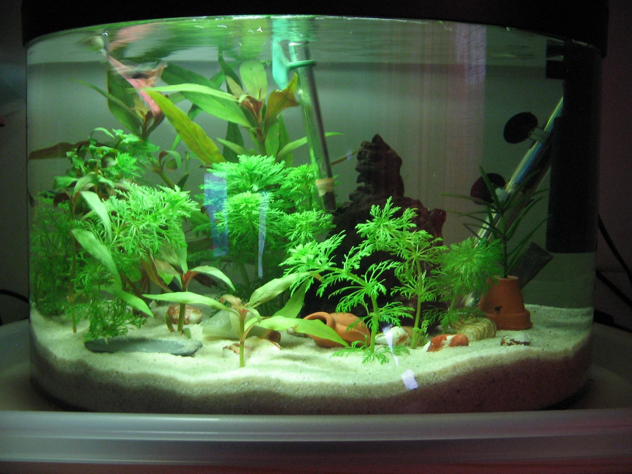 fish tank setup ideas